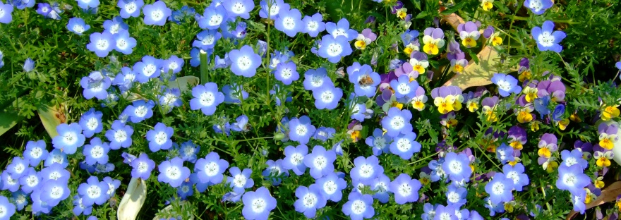 Writing The Backbone Of Blue Bouquet An Analysis Of Literary
