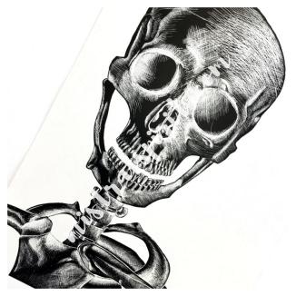 alex the skull